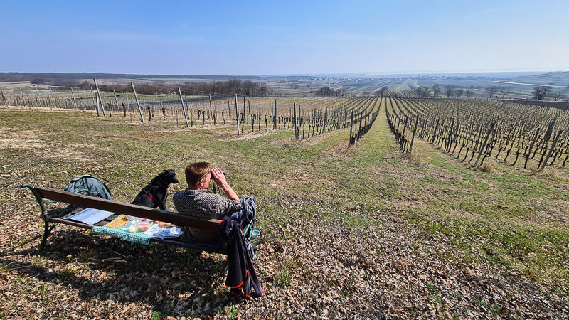 Ausblick Weinlehrpfad Jois