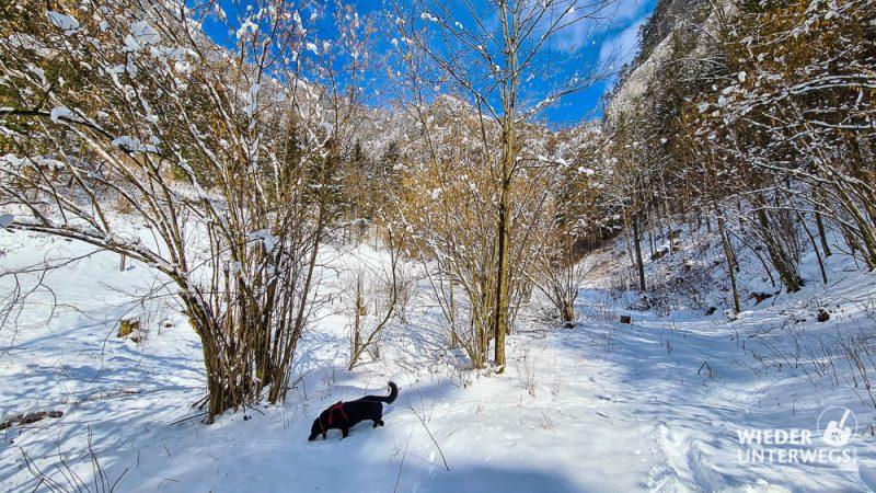 Spaziergang mit Hund in Schwarzau im Gebirge