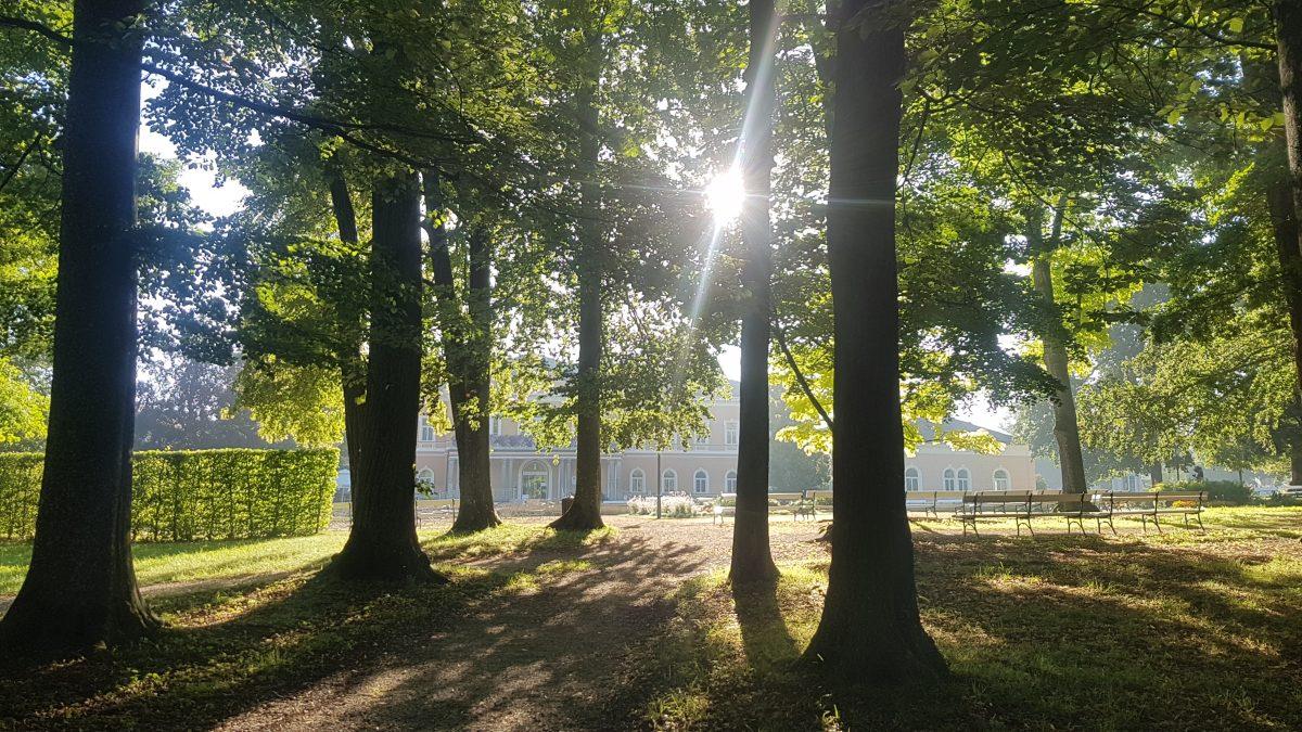 kurpark bad hall bäume