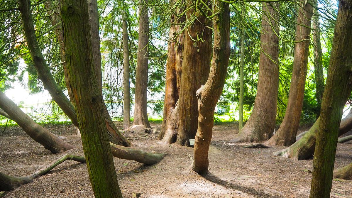kurpark bäume Bad Hall
