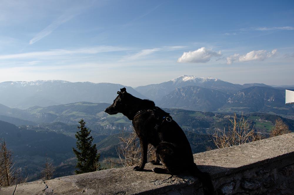 Mit Hund wandern Semmering