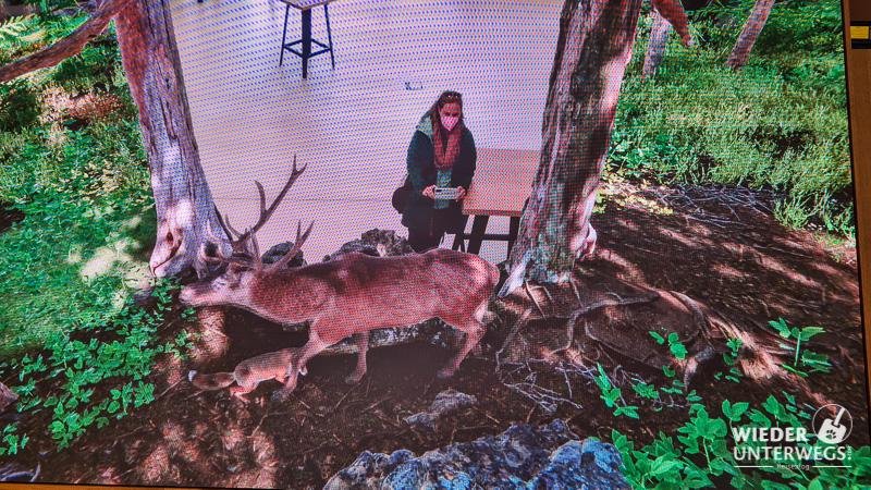 Video Wall Haus der Wildnis