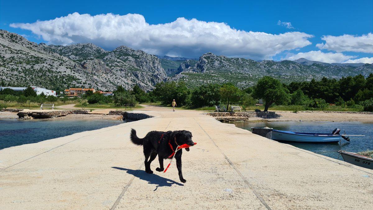 paklenica strand mit hund