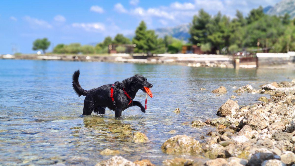 hund am strand paklenica