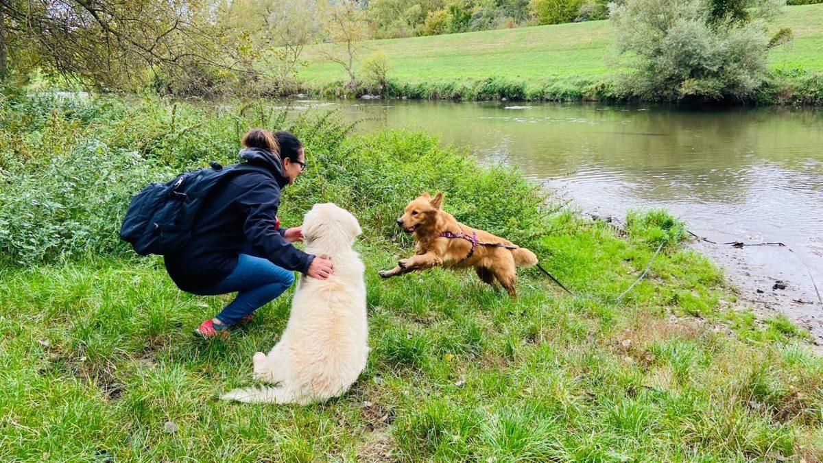 hundeurlaub mit ulli miestinger, zwei hunde