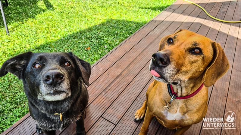 Hunde Produkttest Rinti Drinki