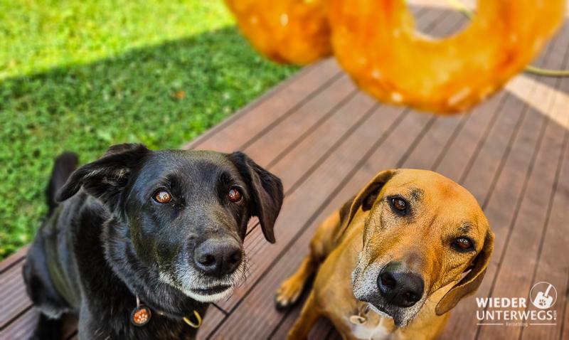 rinti dauerkauring zwei hunde