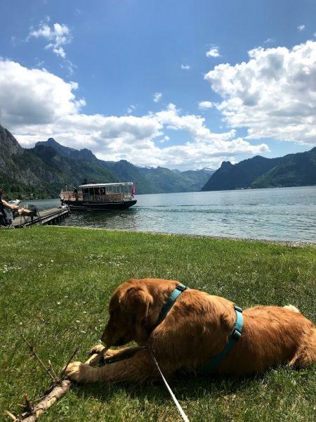 Hund am Traunsee Hundeurlaub Vela ON tour