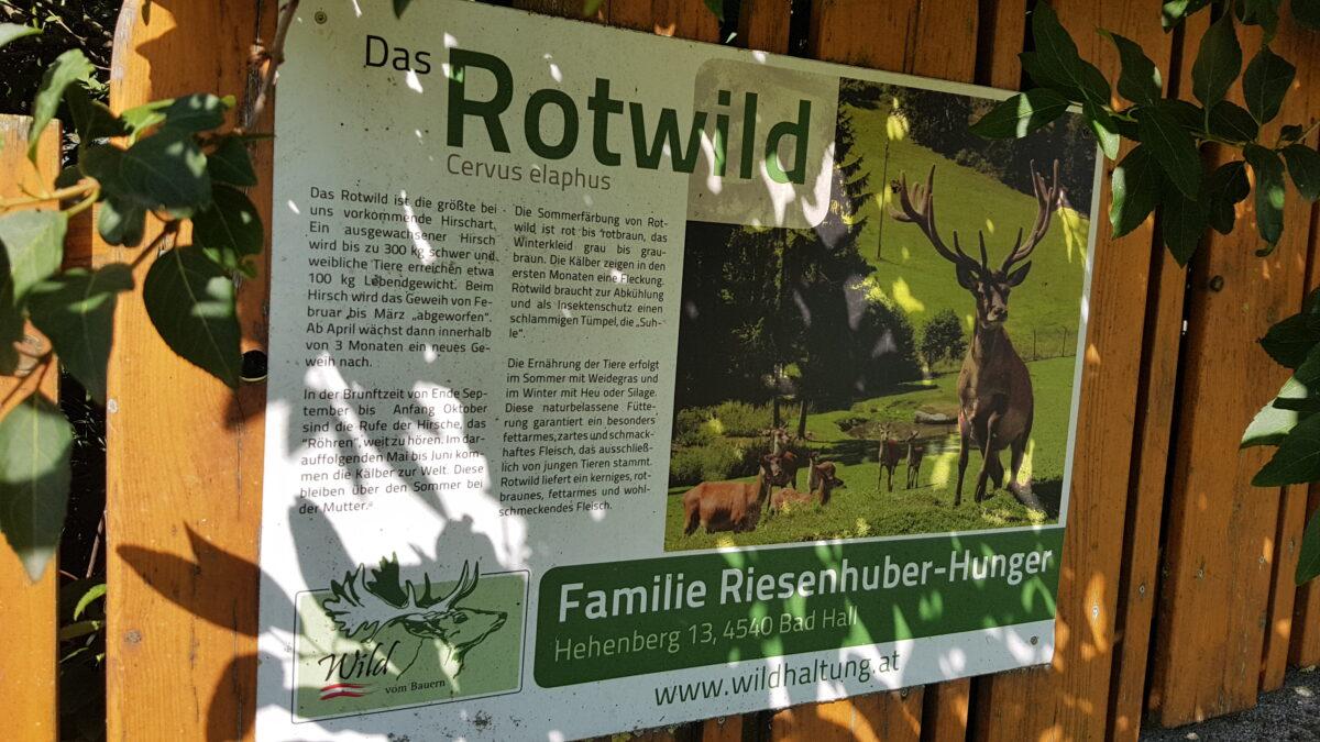 Waldpädagogik Hallerwald