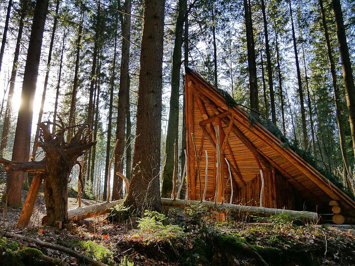 Wald Tipi im Hallerwald