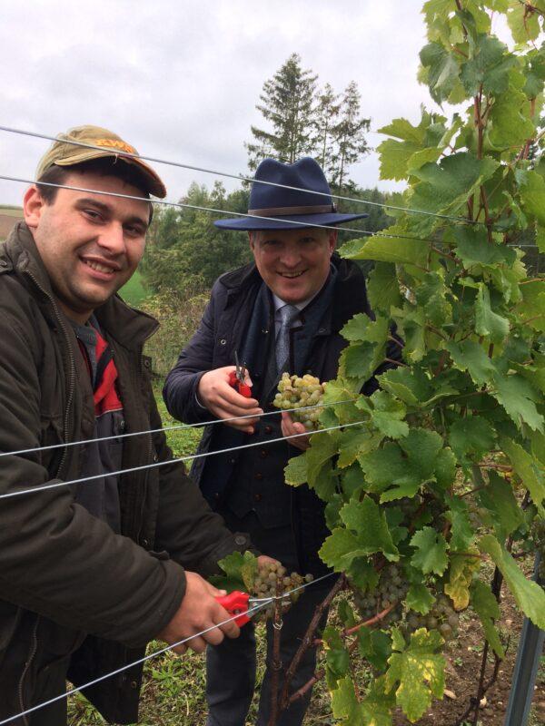 Weinbauer Rogl bei der Jungfernlese