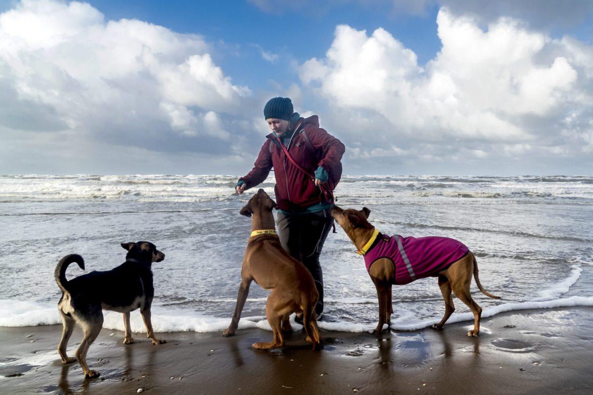 Hunde Noordwijk Strand, Fotografin Bax