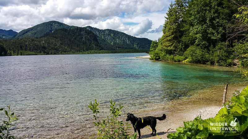 Urlaub mit Hund Packliste Almsee