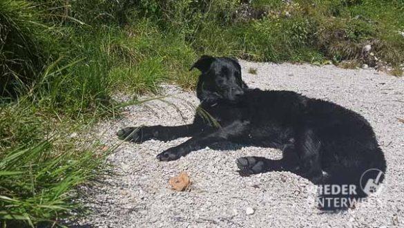 Altausseer See Hund Web (31 Von 44)