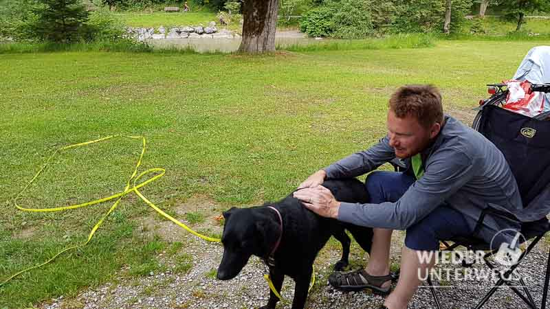 camping mit hund bürsten