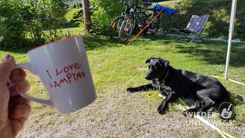 I love Camping mit Hund