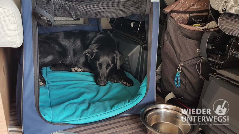 Hund im Wohnmobil schläft