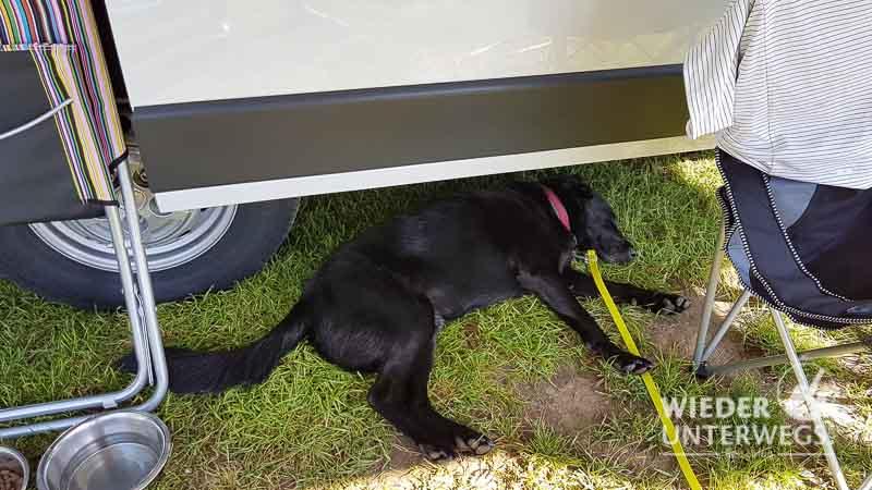 hund unter dem campingbus liegend