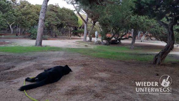 Campingplätze Sardinien Web Artikel (24 Von 116)
