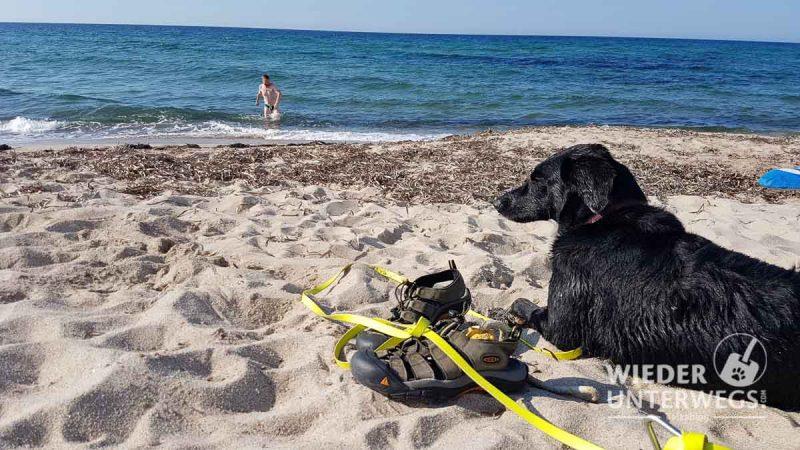 camping mit hund am sandstrand kroatien