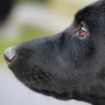 Frühling: Ein Hund entdeckt Gefühle.