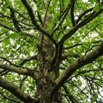 Der Baum in mir. Antworten aus der Natur?