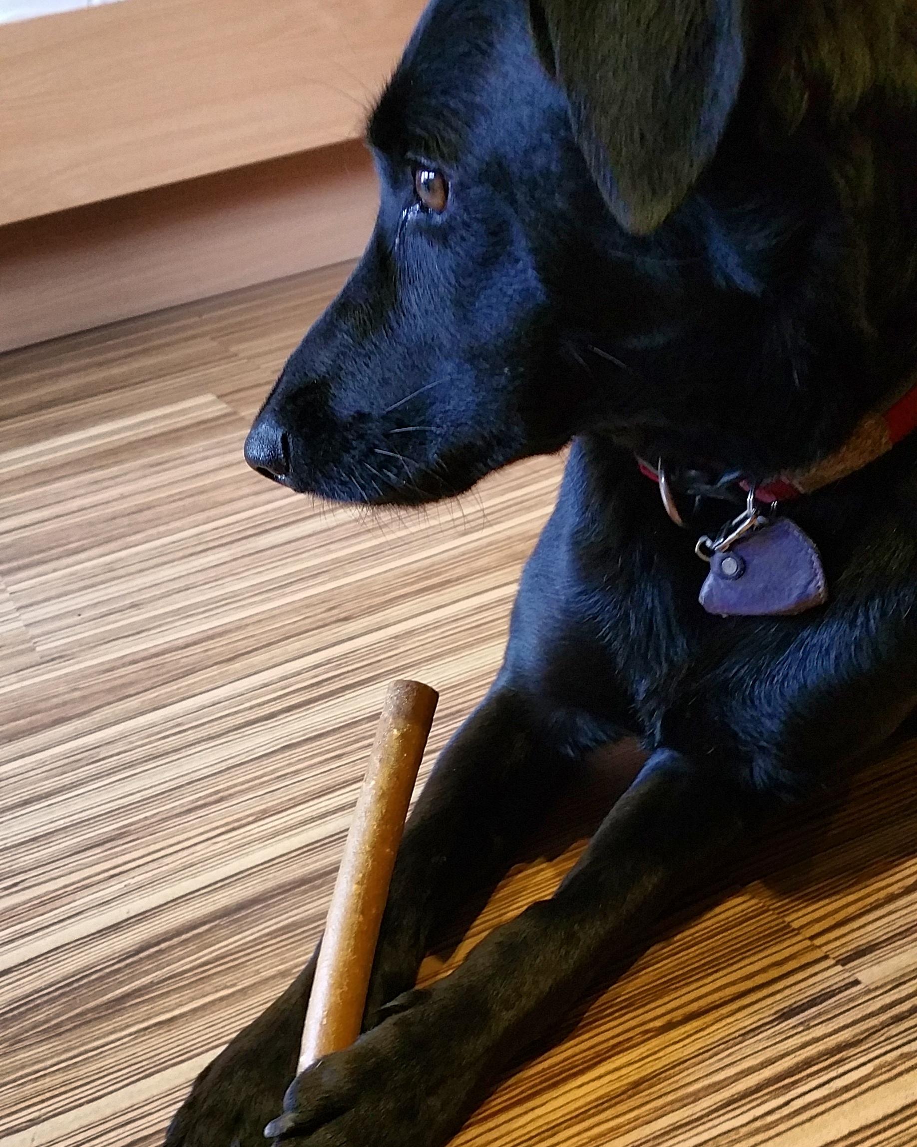 Urlaub Mit Hund Eingezäunter Garten: Urlaub Mit Hund Im Gasteinertal: Die Residenz Gruber