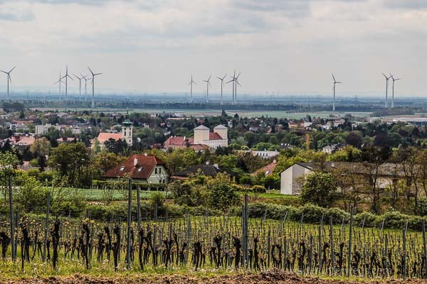 In die Grean Wolkersdorf Weinviertel