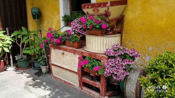 Kärnten Reiseblogger SlowFood Mai2016 Web (147 Von 206)