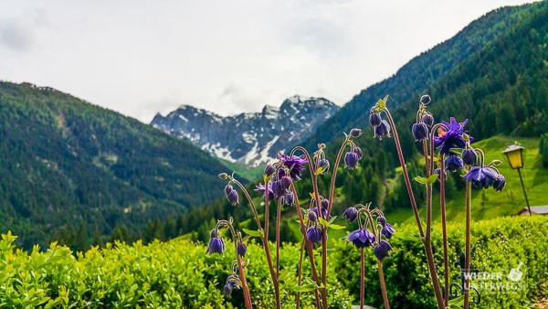 Kärnten_Reiseblogger_SlowFood_Mai2016_web (76 von 206)