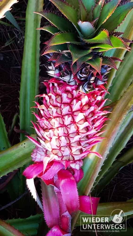 Mauritius 2016 Lakaz Chamarel Tamassa Lux Web 226 Von 478