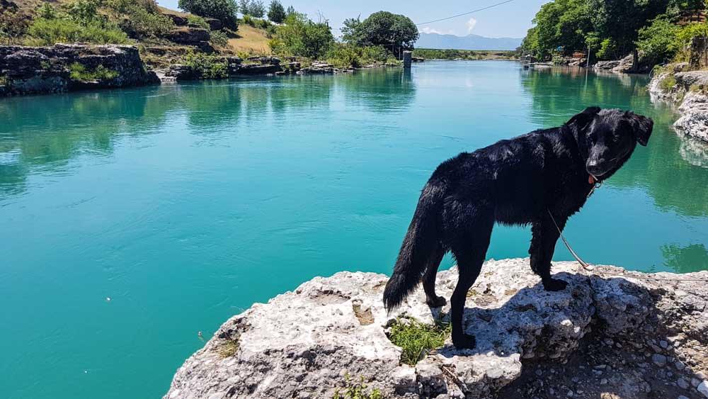 Hund wasserfall montenegro