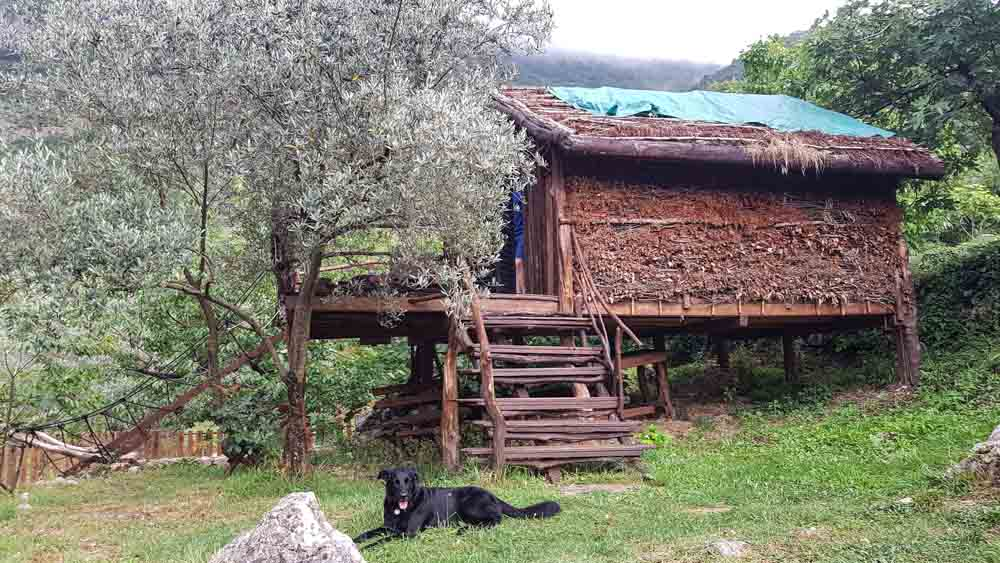 baumhaus hund montenegro