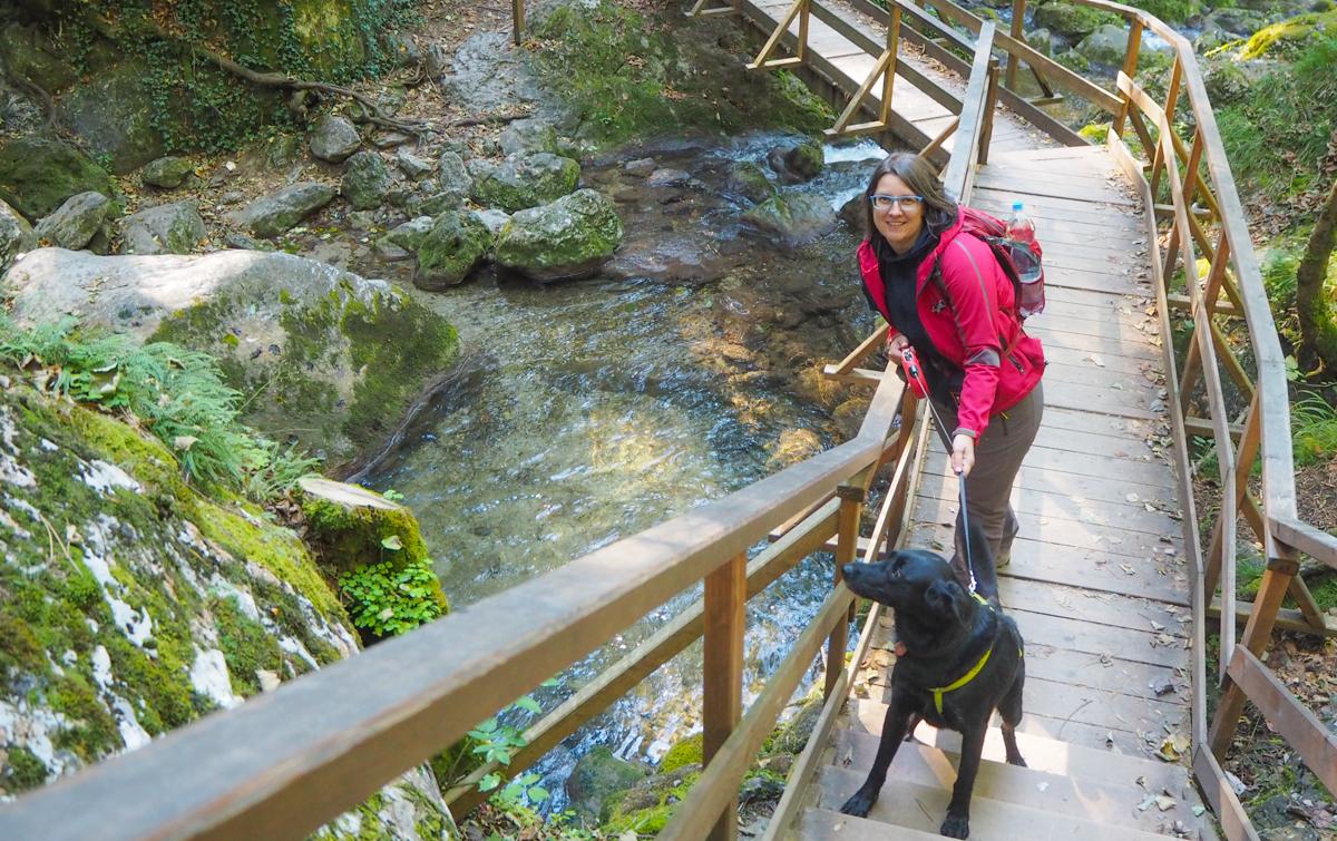 Myrafälle mit Hund Ausflug