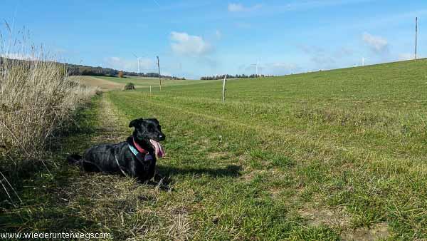 NKS Lehrpfad web (14 von 20) herbstwanderung mit hund weinviertel