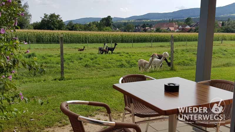 Meine Terrasse im Jufa Pölla