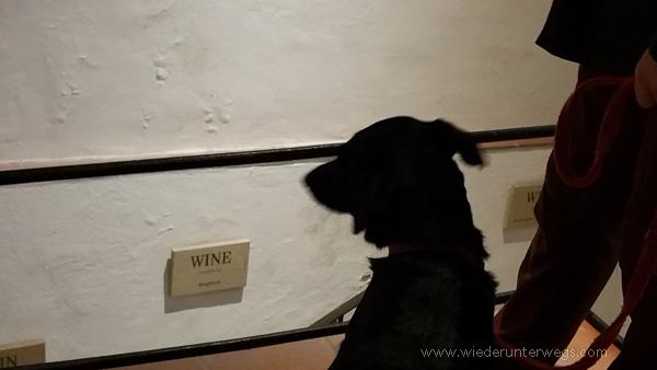 Keller Retz Führung Hund
