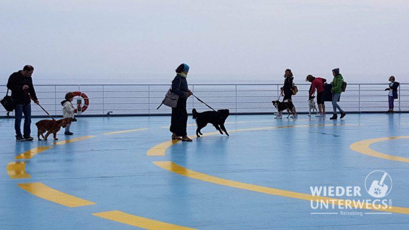 hunde an deck der fähre