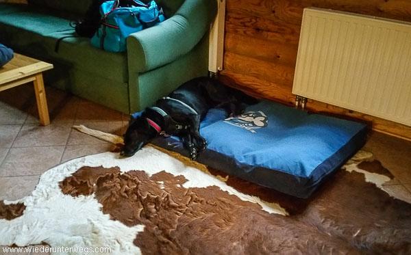 Alles bereit für den Herrn Hund im Kamp Kobarid