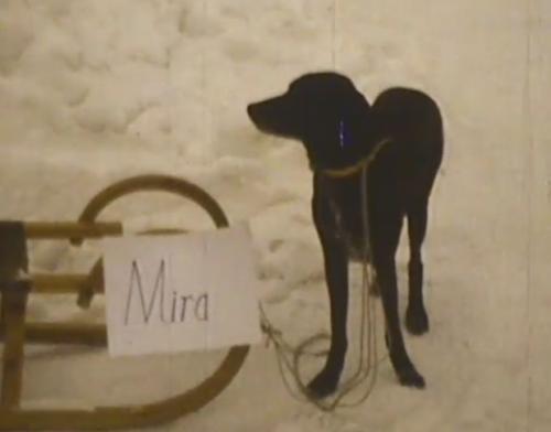Wintercamping mit Hund anno dazumals