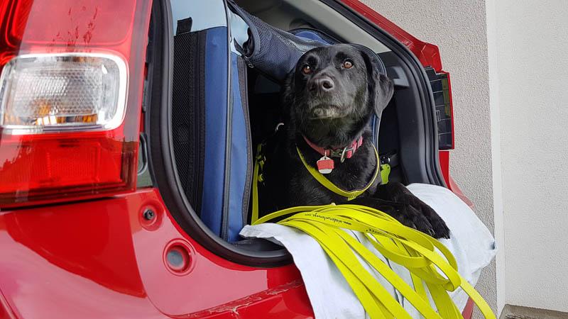 Hund im Suzuki Ignis