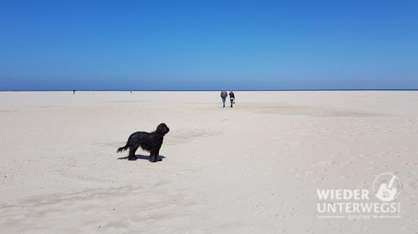 Hund Texel strand