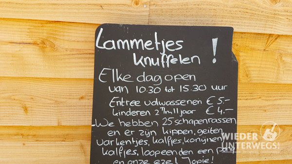 Lämmer schmusen Texel