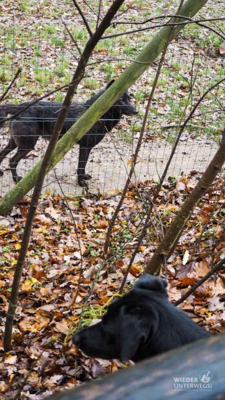 Hund und Wolf Ernstbrunn