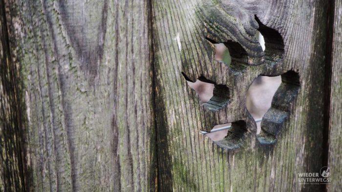 Tierpark Ernstbrunn Wolfstatze