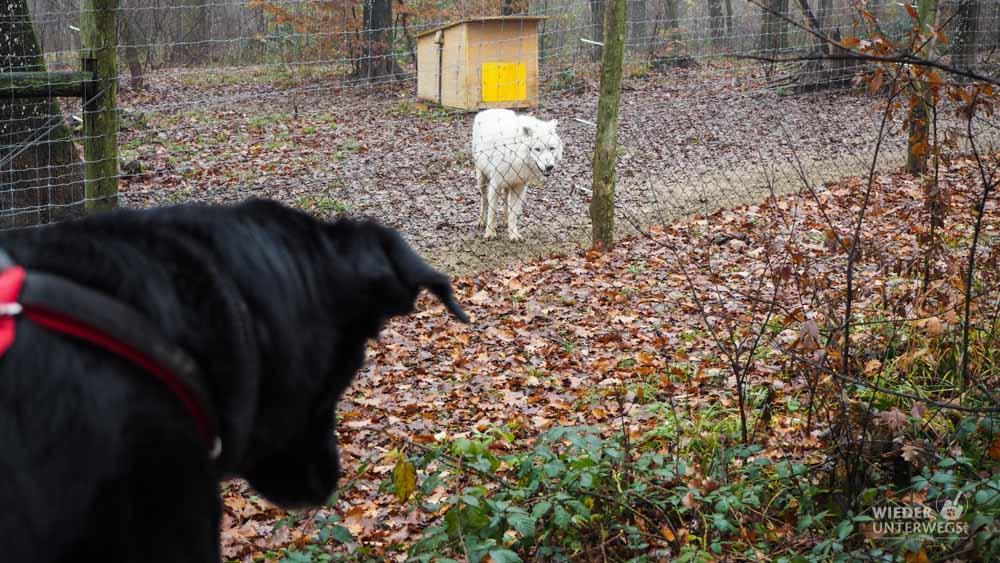 Hund und Wolf Wildpark Ernstbrunn