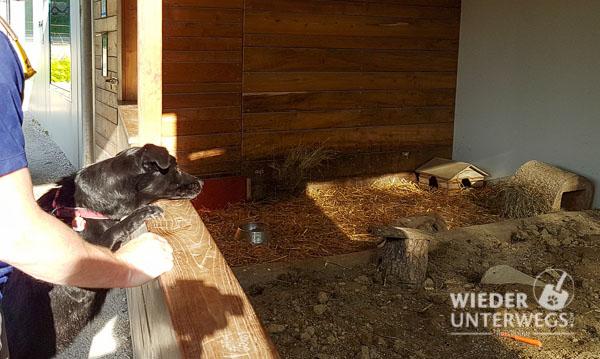 Tierpark Haag mit Hund