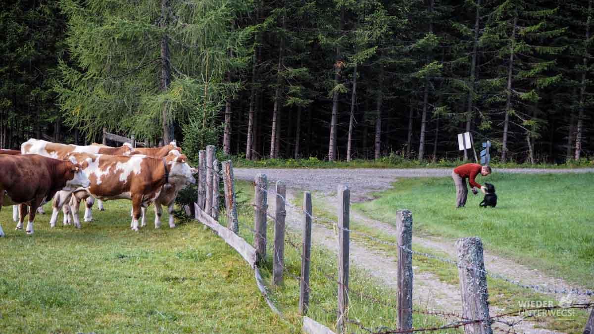 Kühe Urlaub auf dem Bauernhof