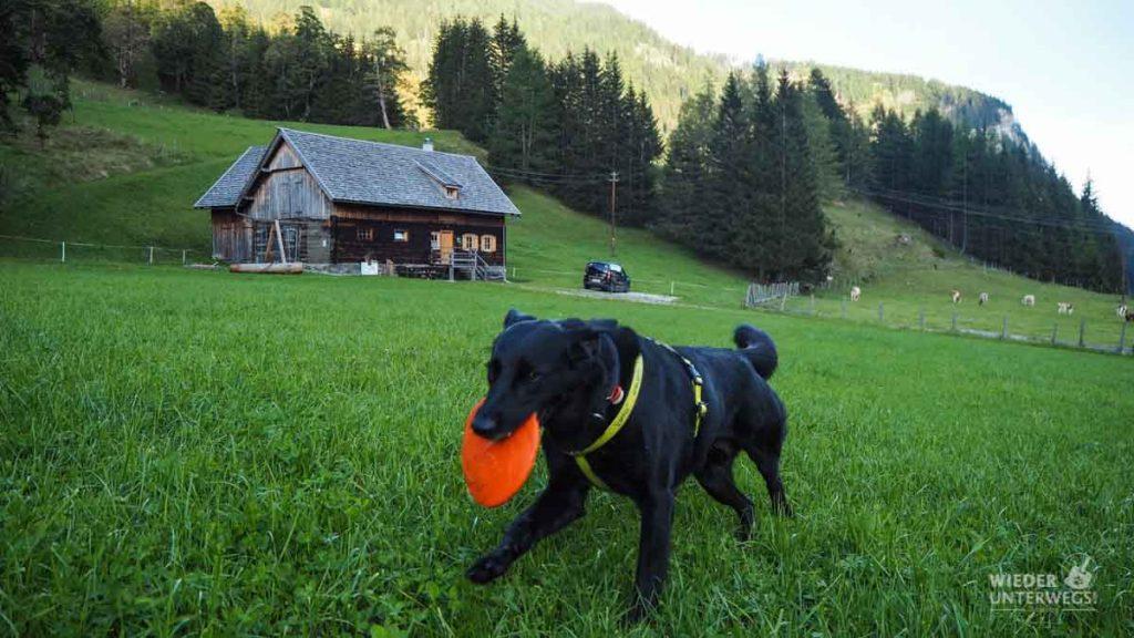 Hundeurlaub Bauernhof Salzburg