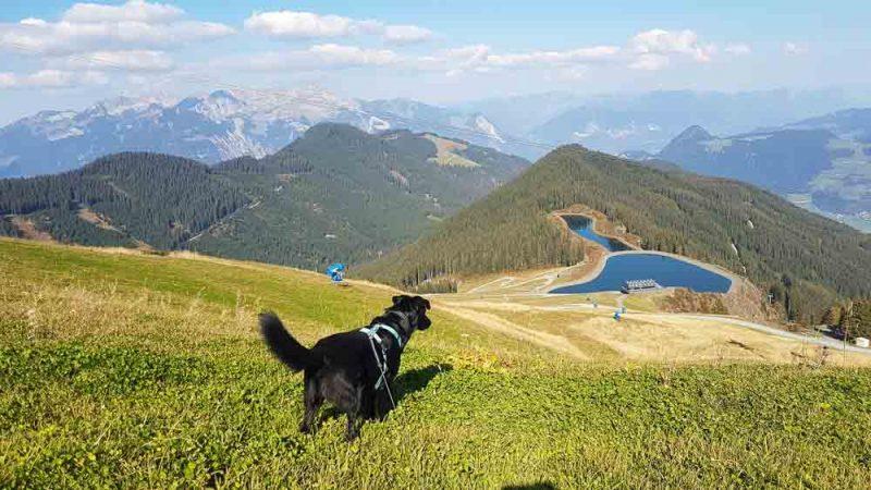 Urlaub Mit Hund Österreich Zillertal Hotel Magdalena Web (126 Von 328)